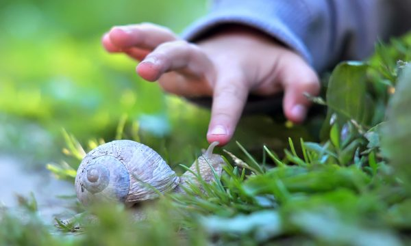 Child's finger pointing on the snail.