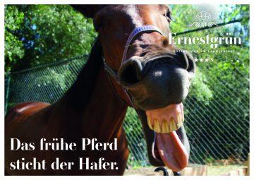 Landschloss_Ernestgruen_Postkarte3